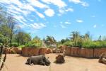 Habitat_Serengeti