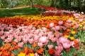 Castello di Pralormo (TO) comunica che La mostra Messer Tulipano prevista dal 3/4 al 2/5 è stata annullata