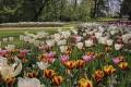 Castello di Pralormo e Mostra Messer Tulipano dal 28 marzo al 1 maggio 2020. Visite a prezzi scontati