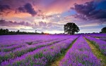 clouds-above-the-lavender-field