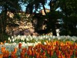 castello-di-pralormo_messer-tulipano-0c