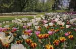 castello-di-pralormo_messer-tulipano-635